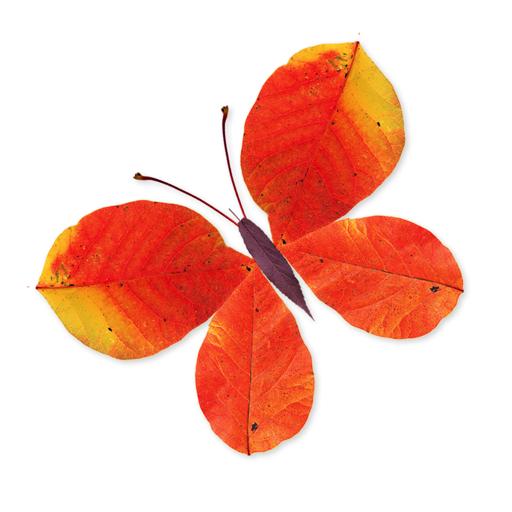 Labo Leaves(3+)