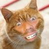 貓咪我! Cat Me!