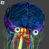 The Complete Human Brain PRO