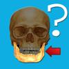 解剖学クイズ