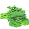 今日菜价 - 蔬菜价格查询,菜价速报