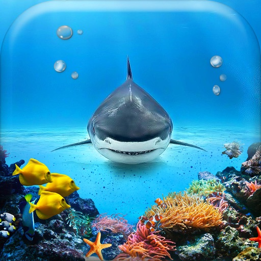 Sottacqua Sfondo Galleria Bellissimo Animali Marini Sfondi