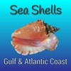 Sea Shells of the Gulf and Atlantic Coasts