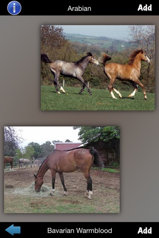 Best Horse Breeds screenshot 2