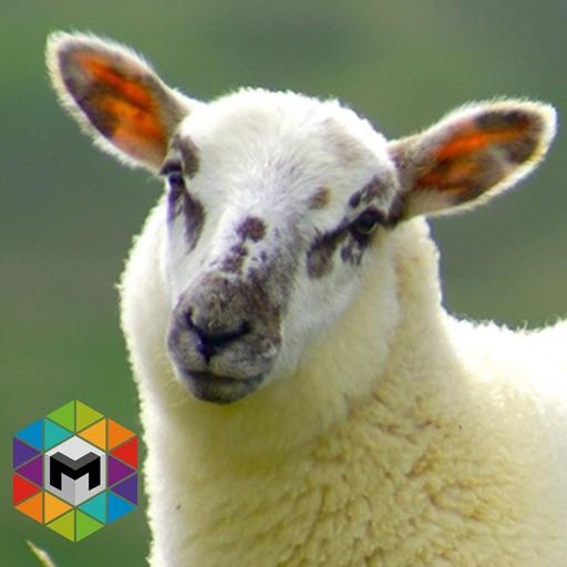 My Sheep Simulator iOS App