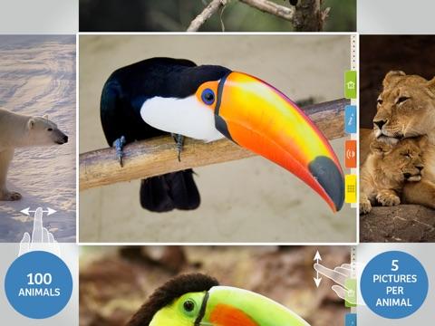 Screenshot #2 for Animals 100 - Real Animals