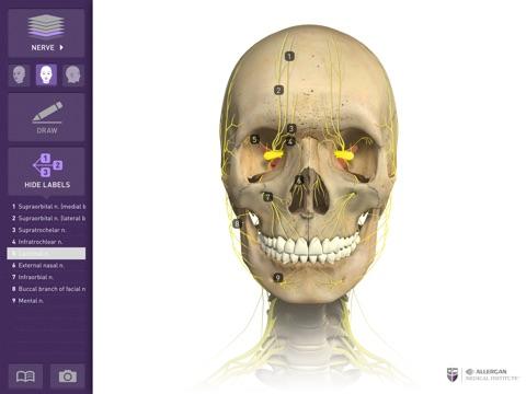 Interactive Anatomy - JO screenshot 4