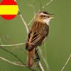 Canto Aves Id de España - una guía para identificar pájaros  por su canto