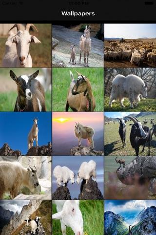 Goat Wallpapers screenshot 2