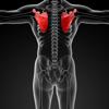 Memorize anatomia Ossos humanos por Sliding Tiles Puzzle: A aprendizagem torna-se divertido