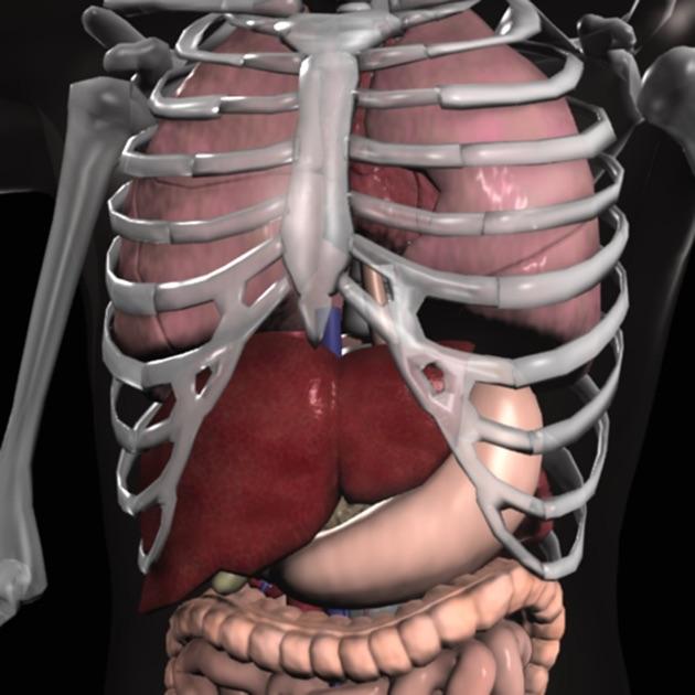 3 d anatomy