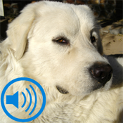 Dogs 101 icon