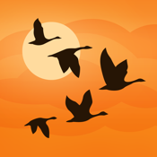 Birds Near Me - Birding Fieldguide icon