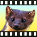 Movimals animal video app for kids and toddlers icon