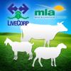 Veterinary Handbook for Cattle, Sheep & Goats