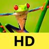 Fundos & Papéis de Parede para iPhone 6/6s/5s: Fotos e Temas em HD para Tela Inicial