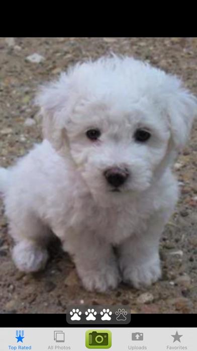 Puppy PalsScreenshot of 4