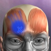 Muscle Trigger Points Mobile App Icon