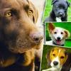 Cani e cuccioli  - Sfondi e Wallpapers: Animali