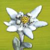 Alpenblumen Finder – bestimmen und entdecken Sie die Wildblumen der Alpen mit dem Blumen Naturführer der Schweiz
