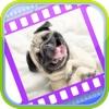 Смешные видео собак