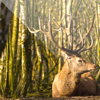 Easy Deer Hunting Calls - Finest Deer Hunting Calls which Every Deer Hunter Must Use