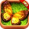 A Butterfly Farm HD Pro