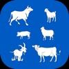 Stock Show App
