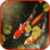 Koi Pond Wallpaper Koi Background Koi Puzzles