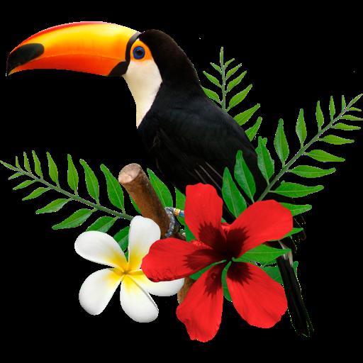 巨嘴鸟任务 Toucan tasks