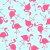 Flamingo Pattern Wallpapers HD: Quotes Backgrounds with Design Pictures