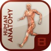 Video Training for Human Anatomy