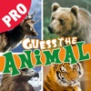 Guess the animal hidden mystery pro