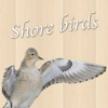 Shorebirds of the United States and Canada