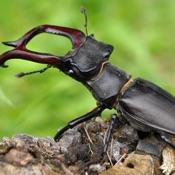 Insekten Welt