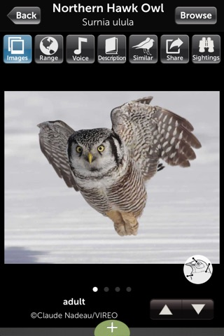 Audubon Owls Guide screenshot 3
