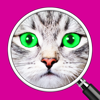 What's the Photo? ~ Free Close up Game Quiz