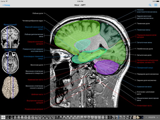 E anatomy imaios