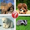 Aww Baby Animals Trivia - Guess the Lovable Animals Picture Quiz