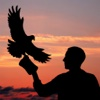 Hawk Bomb