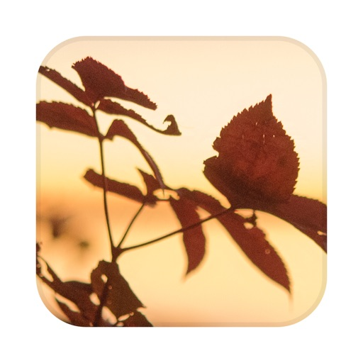 Picture Match iOS App