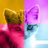 Kittens vs. You - Free Trivia and Quiz Game for Kittens of All Ages free kittens in minnesota