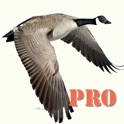 Goose Hunting Pro icon
