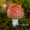 Mushroom Id North America - Fungi Identification Guide to Toadstools and Mushrooms