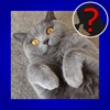 Cat Breed Quiz Maestro