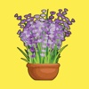 Lucky Lavender - The Luckiest House Plant