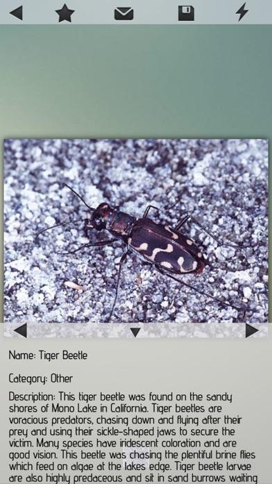 Insects Pedia Screenshot