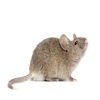 Mouse Noise - Sounds Effects of Mice For Your Device
