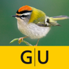 Vögel bestimmen – erkennen Sie heimische Vogelarten in der Natur und im Garten an Stimme, Gefieder und Lebensraum