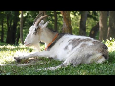 Video Touch - Tiere Screenshot